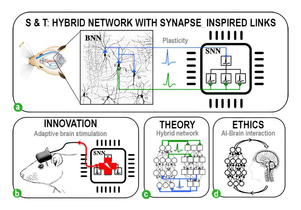 """有望""""拯救""""受损大脑,SynSense时识科技用类脑芯片技术构建下一代脑机接口"""