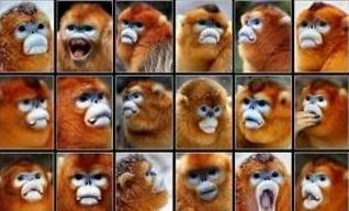 """真假美猴王秒区分?我国科研人员研发""""猴脸识别""""技术,识别成功率达94%"""